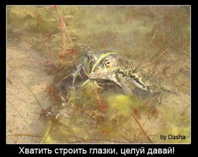 Озеро Надежда лягушка демотиватор