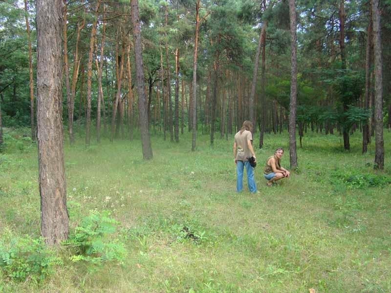 Александрия Сосновый лес