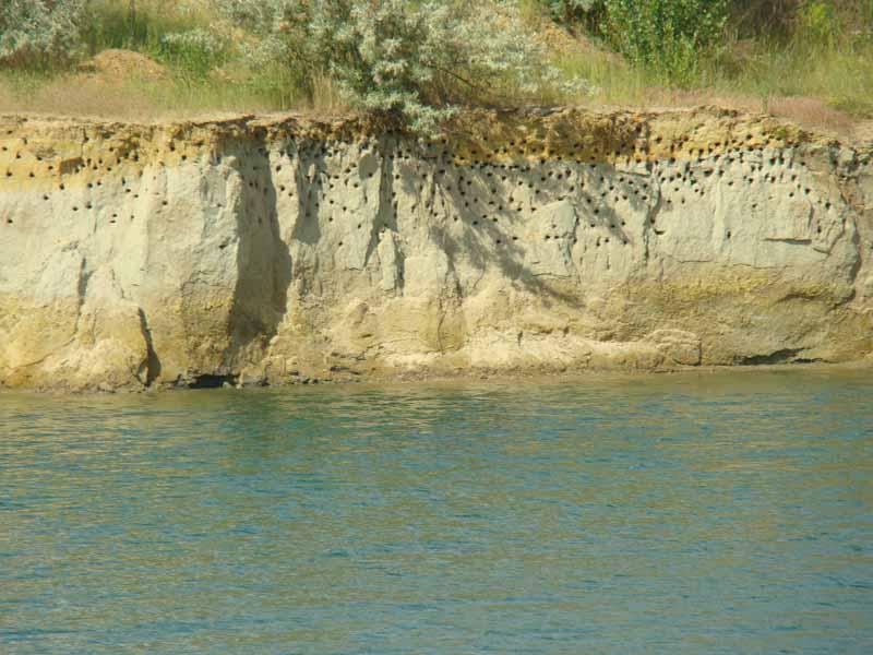 ласточкины гнезда Александрия