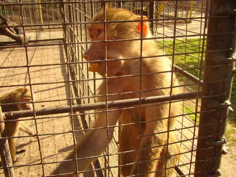 зоопарк Кременчуг Александрия