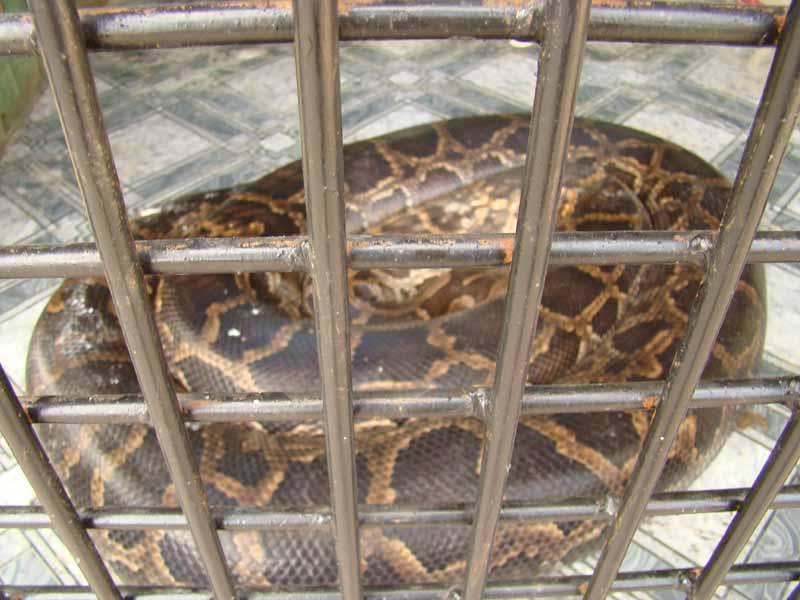 Удав в зоопарке селе Озера Кременчуг Александрия